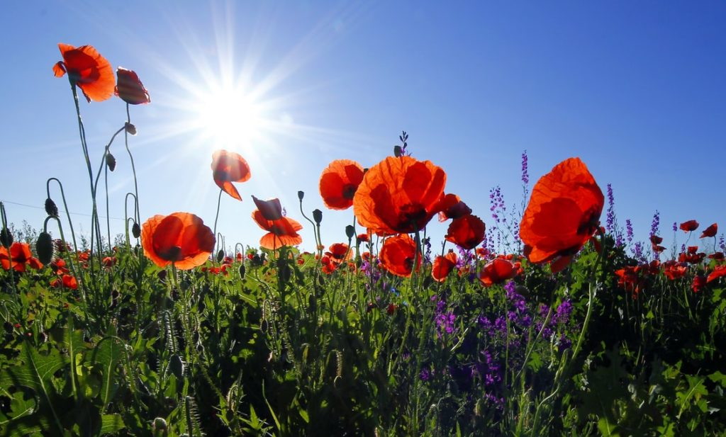Funeral Planning: How a Remembrance and Services Memorandum Can Help